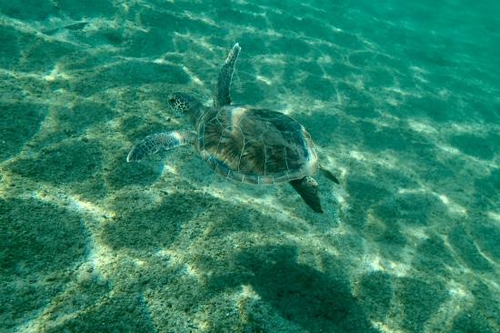 Baby Turtle spotted in Göcek