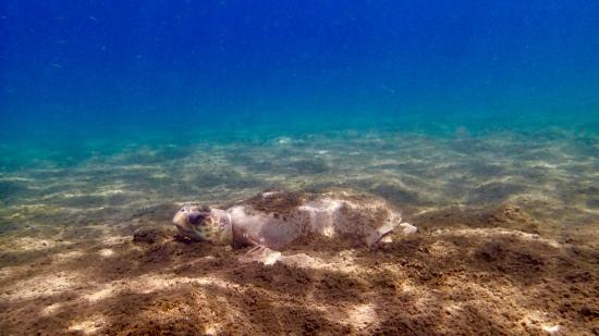 Turtle Sleep